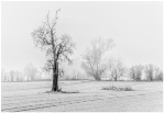 Tree In Mist - Accepted - John White EFIAP/p, BPE5*, CPAGB