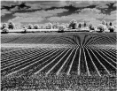 Crop Lines - Accepted - John White EFIAP/p, BPE5*, CPAGB