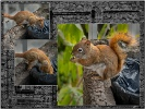 Urban Squirrel - Ian Griffiths